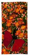 Kalanchoe Plant With Butterfly Hand Towel