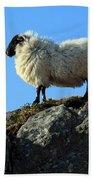 Kerry Hill Sheep Hand Towel