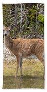 Key Deer Portrait Bath Towel
