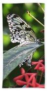 Key West Butterfly Conservatory - Idea Leuconoe Bath Towel