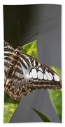 Key West Butterfly Conservatory - In Brown And White Bath Towel
