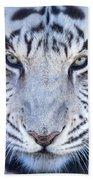 Khan The White Bengal Tiger Bath Towel