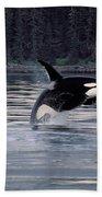 Killer Whale Orcinus Orca Breaching Bath Towel