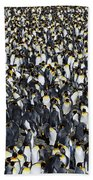 King Penguin Colony Bath Towel