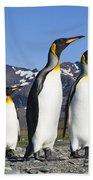 King Penguins St Andrews Bay South Bath Towel