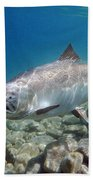 King Salmon And Dardevle Bath Towel