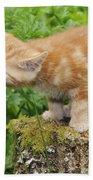 Kitten With Flowers Bath Towel