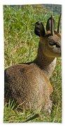 Klipspringer Antelope Bath Towel