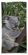 Koala Joey Australia Bath Towel