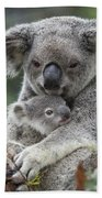 Koala Mother Holding Joey Australia Bath Towel