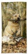 Labrador Jumping With Stick Bath Towel
