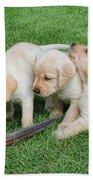 Labrador Retriever Puppies And Feather Bath Towel