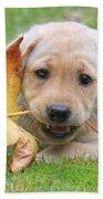 Labrador Retriever Puppy With Autumn Leaf Hand Towel