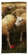 Lambs Bath Towel
