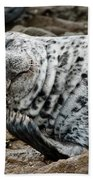 Laughing Seal Bath Towel