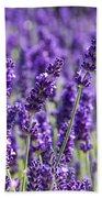 Lavender Fields Bath Towel