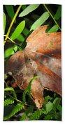 Leaf Among Ferns Bath Towel