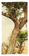 Leopard Eating His Victim On A Tree In Tanzania Bath Towel