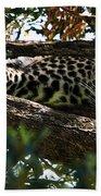 Leopard In A Tree Hand Towel