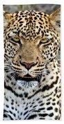 Wild Leopard In Botswana Bath Towel