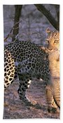 Leopard With African Wild Cat Kill Bath Towel
