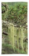 Lichens On Tree Branches In The Scottish Highlands Bath Towel