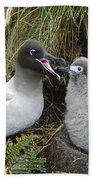 Light-mantled Albatross Feeding Chick Bath Towel