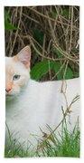 Lilac Point Siamese Cat Bath Towel