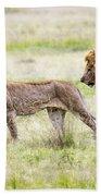 Lion Couple Bath Towel