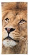 Lion In Deep Thought Bath Towel