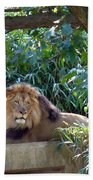 Lion King At Washington Zoo Bath Towel