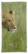 lion Masai Mara Kenya Bath Towel