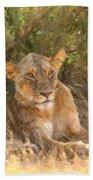 Lioness  Panthera Leo Resting Bath Towel