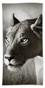 Lioness Stalking Hand Towel
