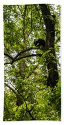 Little Bear Cub In Tree Cades Cove 2 Bath Towel