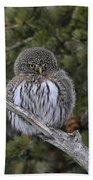 Little One - Northern Pygmy Owl Bath Towel