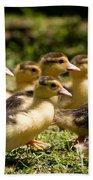 Yellow Muscovy Duck Ducklings Running Fast  Bath Towel