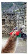 Llama Touring Machu Picchu Bath Towel
