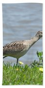 Long Billed Curlew At Palacios Bay Tx Bath Towel