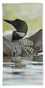 Loon Wing Spread With Chick Bath Towel