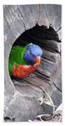 Lorikeet - Peek-a-boo Bath Towel