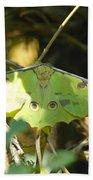 Luna Moth In The Sun Hand Towel