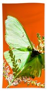 Luna Moth On Astilby Orange Back Ground Bath Towel