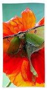 Luna Moth On Poppy Aqua Back Ground Bath Towel