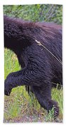 Lunging Black Bear Near Road In Grand Teton National Park-wyoming   Bath Towel