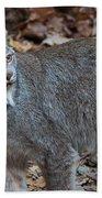 Lynx Eyes Bath Towel