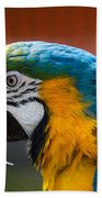Macaw Tropical Bird Bath Towel