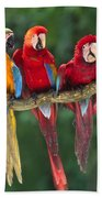 Macaws Bath Towel