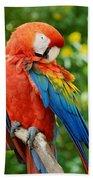 Macaws Of Color31 Bath Towel