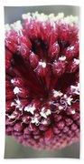 Macro Of Round-headed Leek Flower Allium Sphaerocephalon  Bath Towel